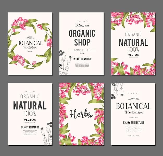 Set di banner di piante ed erbe. elemento per design o carta di invito