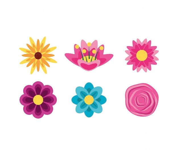 Set di bellissimi fiori naturali