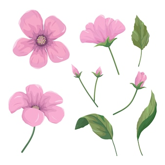 Set di bellissimi fiori rosa