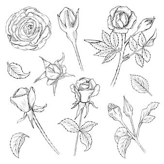Set di boccioli di fiori di rosa disegnati a mano e steli con foglie