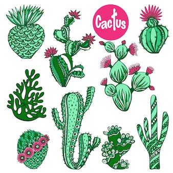 Set di cactus di colore