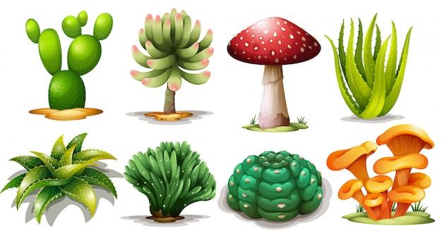 Set di cactus diversi