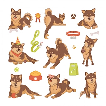 Set di cani shiba inu