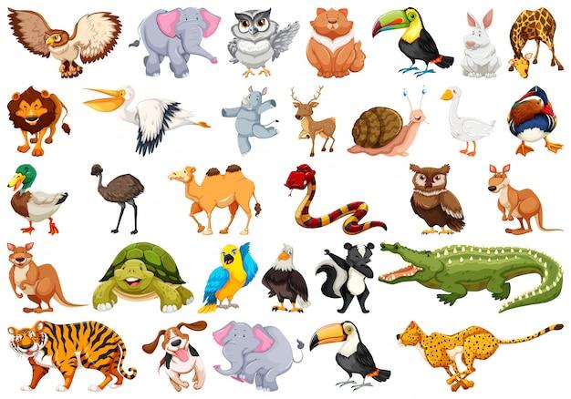 Set di caratteri animali