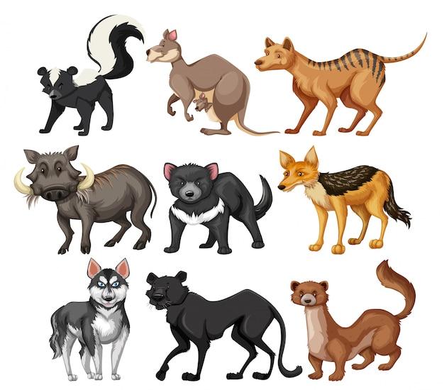 Set di caratteri di animali selvatici