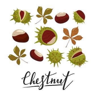 Set di castagne, foglie e bucce.