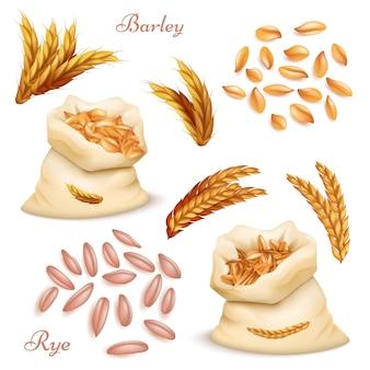 Set di cereali agricoli, orzo e segale