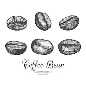Set di chicchi di caffè. disegnati a mano vintage elementi bianchi e nero