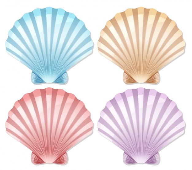 Set di conchiglie colorate