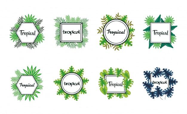 Set di cornici con foglie tropicali