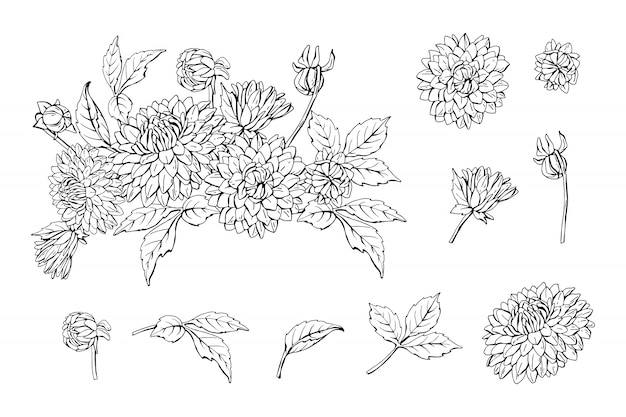 Set di dalia monocromatica bouquet ed elementi floreali