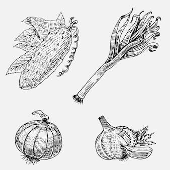 Set di disegnati a mano, verdure incise, cibo vegetariano, piante, cetriolo dall'aspetto vintage, cipolla e aglio, porri