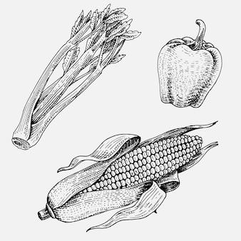 Set di disegnati a mano, verdure incise, cibo vegetariano, piante, mais dall'aspetto vintage, peperoncino e peperoncino, sedano