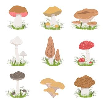 Set di disegni realistici di diversi funghi