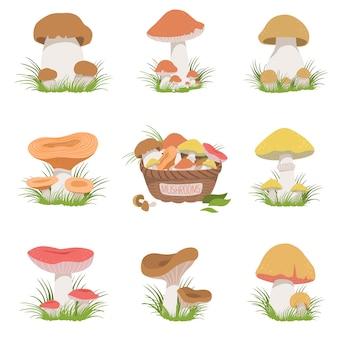 Set di disegni realistici di funghi commestibili