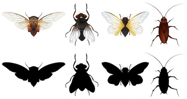 Set di diversi insetti