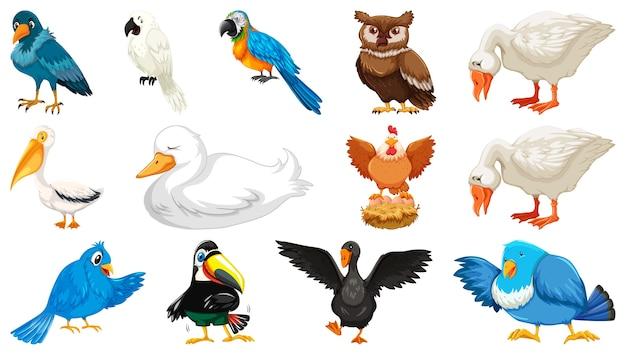 Set di diversi uccelli in stile cartone animato isolato su sfondo bianco