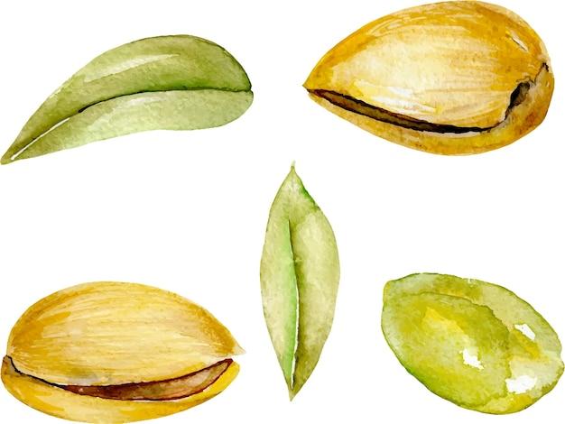 Set di elementi di pistacchio dell'acquerello