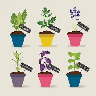 Set di erbe aromatiche con vasi di erbe 4