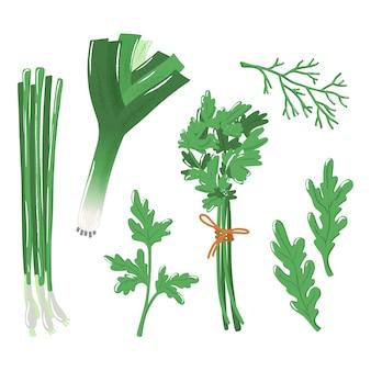 Set di erbe - cipolla, prezzemolo, aneto e rucola