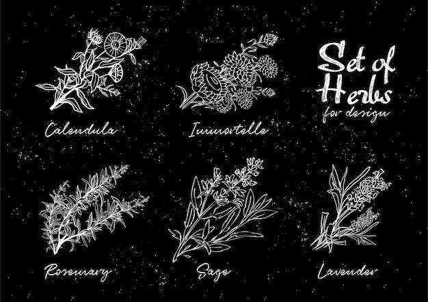 Set di erbe disegnate a mano