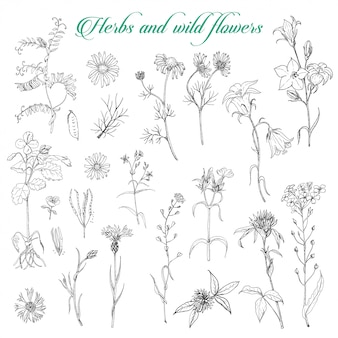 Set di erbe isolate e fiori selvatici