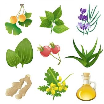 Set di erbe medicinali