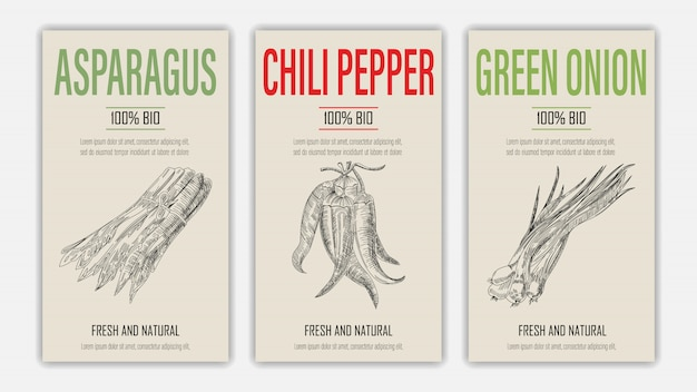 Set di etichetta modello con asparagi, carta di peperoncino e cipolla verde in stile retrò vintage disegnati a mano o schizzo.