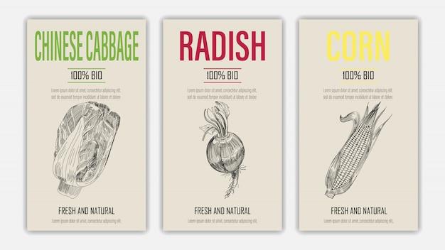 Set di etichetta modello con cavolo cinese, ravanello e mais in stile retrò vintage disegnati a mano o schizzo.