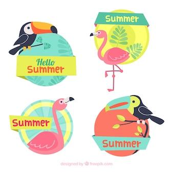 Set di etichette estive con uccelli tropicali