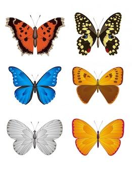 Set di farfalla, illustrazione.
