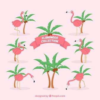 Set di fenicotteri rosa con diverse pose