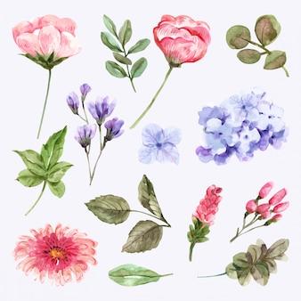 Set di fiori ad acquerello