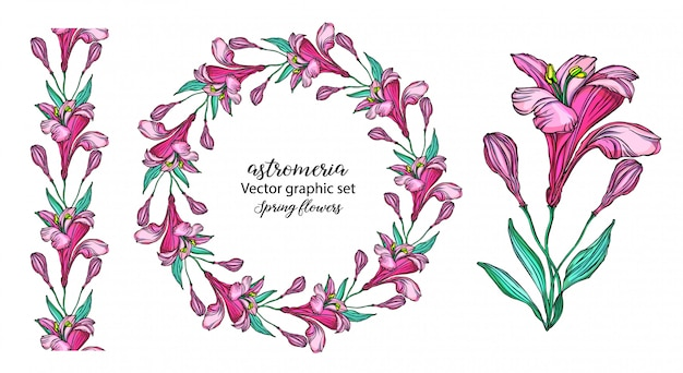 Set di fiori alstroemeria vettoriale