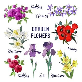 Set di fiori da giardino isolati, mazzi di iris, dalie, clematide, narciso e papavero rosso.