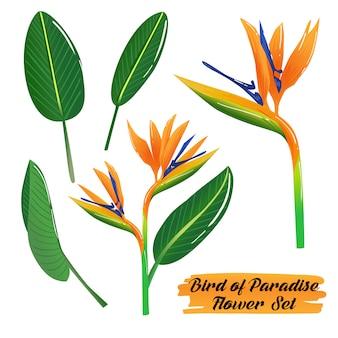 Set di fiori di uccello del paradiso estivo