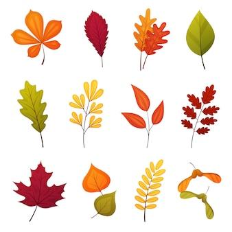 Set di foglie autunnali tra cui quercia, acero, betulla, sorbo e altre foglie. elementi del fumetto di vettore isolati