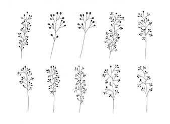 Set di foglie di alloro monocromatiche