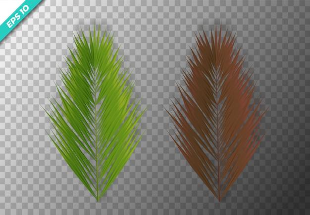 Set di foglie di cocco. illustrazione vettoriale