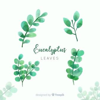 Set di foglie di eucalipto acquerello