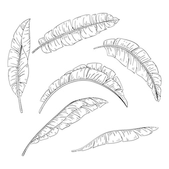 Set di foglie di palma tropicale, raccolta di foglie di banana giungla