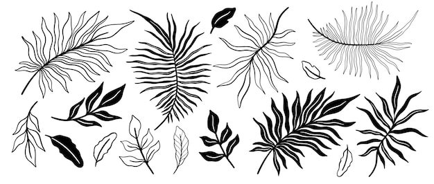 Set di foglie di piante tropicali. elemento floreale botanico