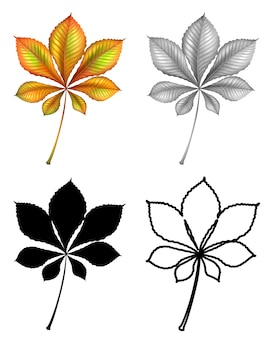 Set di foglie di piante