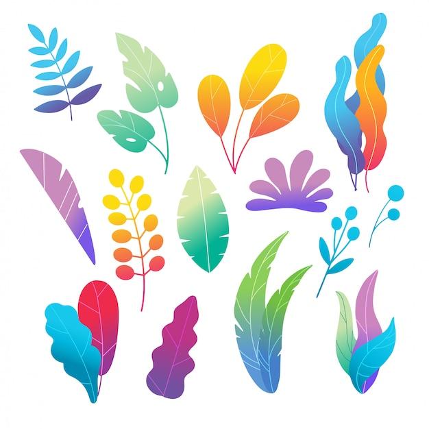 Set di foglie e fiori colorati di doodle