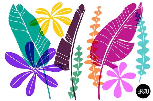 Set di foglie tropicali disegnate.