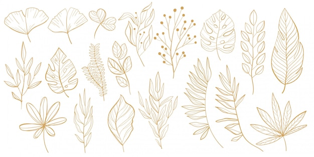 Set di foglie tropicali. palma, ventaglio, monstera, foglie di banana in stile linea. schizzi di foglie tropicali per il design.