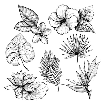 Set di foglie tropicali