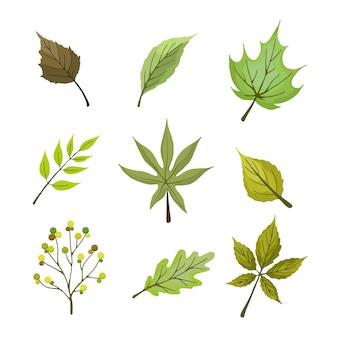 Set di foglie verdi estive in mano disegnato