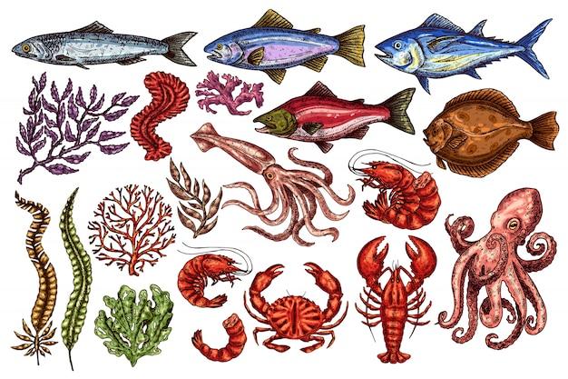 Set di frutti di mare vintage.