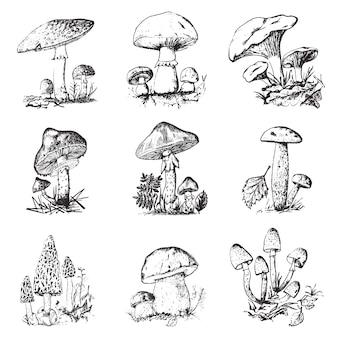 Set di funghi disegnato a mano inciso. cibo vegetariano biologico vintage.